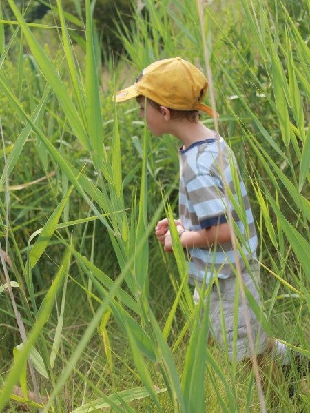 Exploring the marsh
