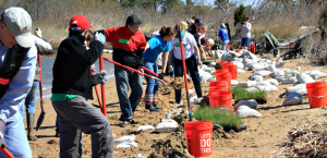 planting_beach_grasses