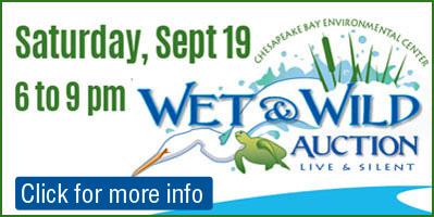 Wet & Wild Ad 2
