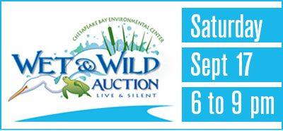 Wet & Wild Auction Art