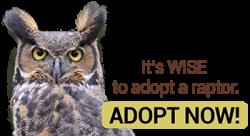 adopt a raptor button